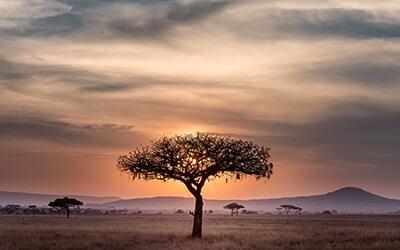 afrika biltong