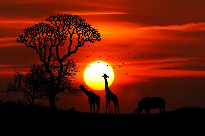 africa biltong